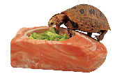 Healthy Herps Stepping Stone Feeding Dish